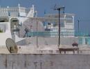 Hammamet 2009